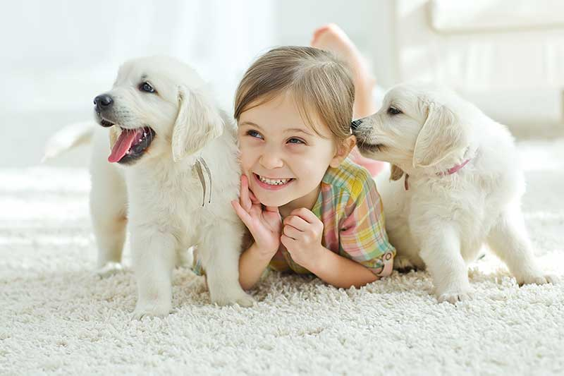 Child with Puppies Lying on Carpet Floor